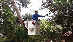 Tree Services Miami Dade And Broward