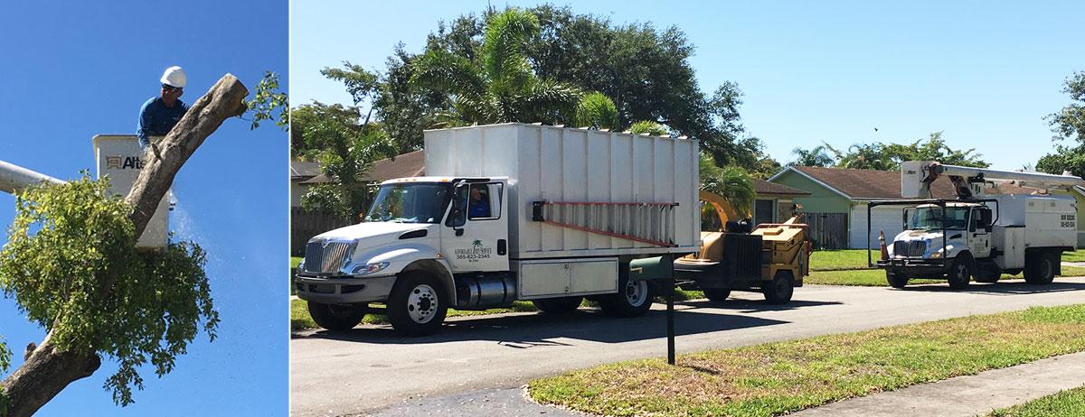 Affordable Tree Service Inc Miami