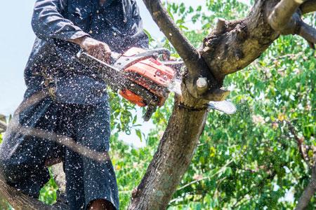 Tree Service Trending News